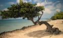 Tree on Beach Art
